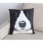 Cushion & cover